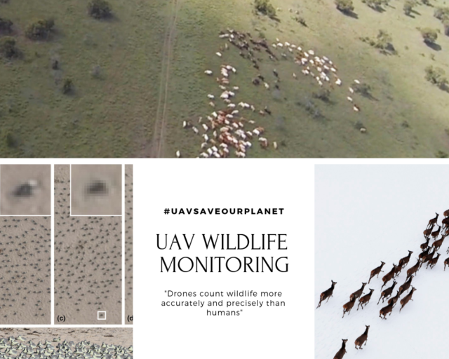 uav wildlife monitoring application
