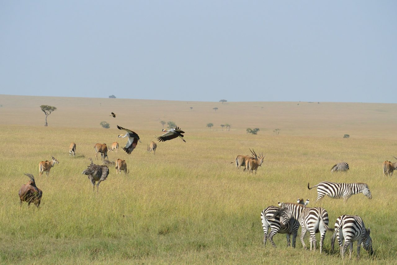 Long-range UAVs for anti-poaching solutions and wildlife application